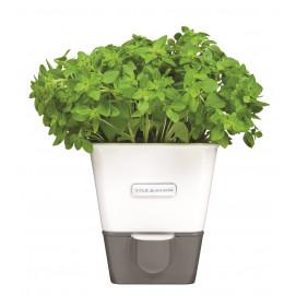 Conservateur à herbes fraîches en pot 1 emplacement